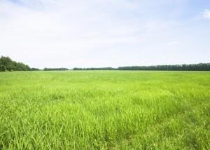 Предлагаю купить участок земли р-н Царского села.