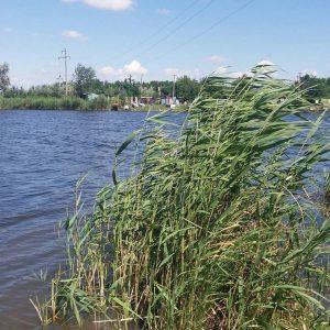 Предлагаю купить дом в г. Новомосковске с выходом к реке.